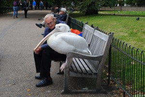 Bird sitting beside man in St. James Park