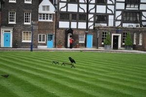 Tower Ravens